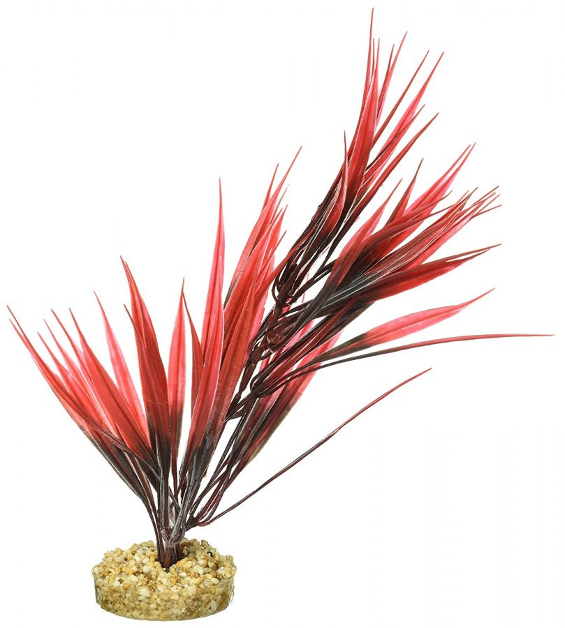 "Goaqua88 Blue Ribbon Sword Plant with Gravel Base - Red | 10"" Tall"