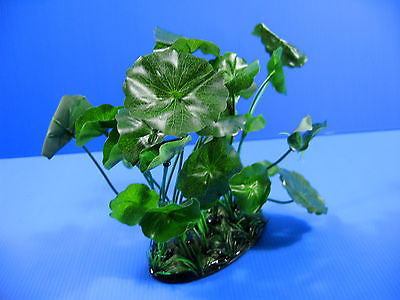 Hydrocotyle maritima Aquarium PLASTIC PLANTS Ornament Decoration fish tank plant