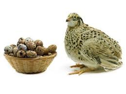 Pasture Raised Quail Eggs! Studies Show They Are Amazing!