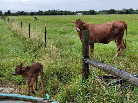 circle c farm - From Our Pasture to Your Plate ™