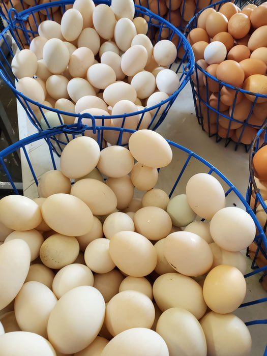 1 1/2 Dozen Pastured Duck Eggs, (18 Eggs)
