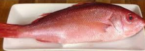 Whole Vermillion Snapper Fish, Wild Caught, Raw, Fresh Frozen, Approx. 1/2-3/4 Pound Each - Circle C Farm