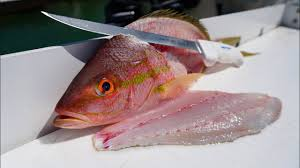 Yellowtail Snapper Fish Fillets, Wild Caught, Raw, Fresh Frozen - Circle C Farm