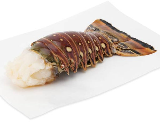 Florida Spiny Lobster Tail, Wild Caught Out Of The Gulf of Mexico (1 Tail)
