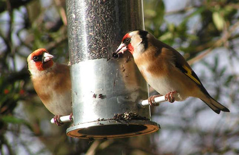 birds enjoying feeder