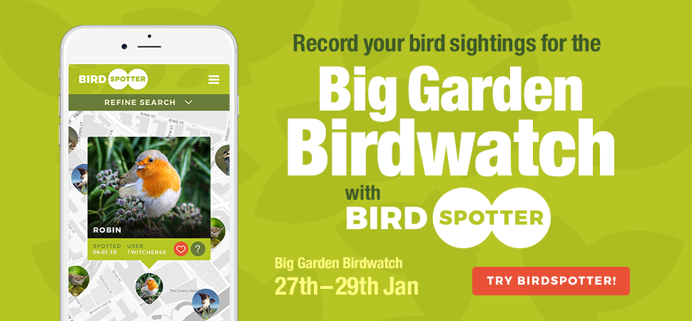 Big Garden Birdwatch with Birdspotter