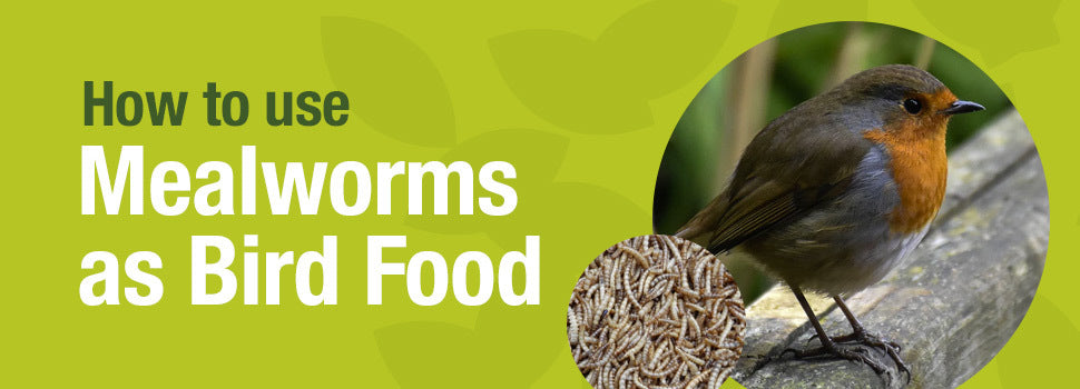 How to use mealworms as bird food