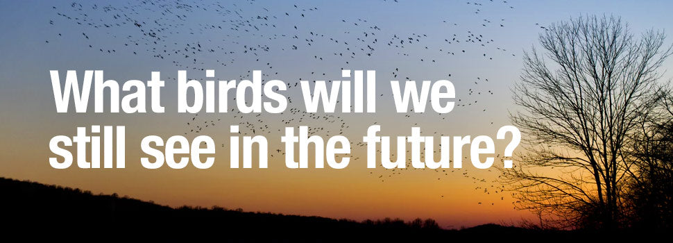 what birds will we see in the future