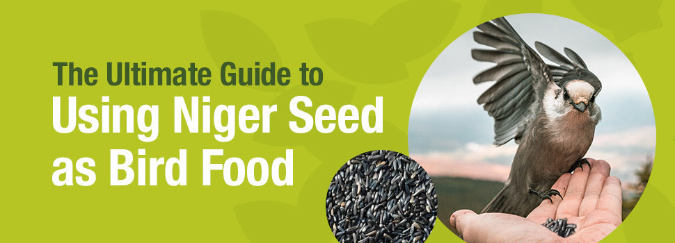 Ultimate guide to niger seed
