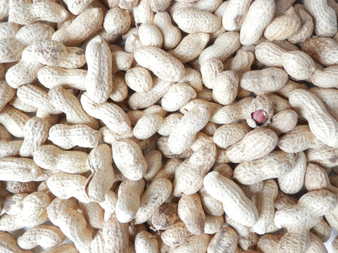 Peanuts in shells monkey nuts