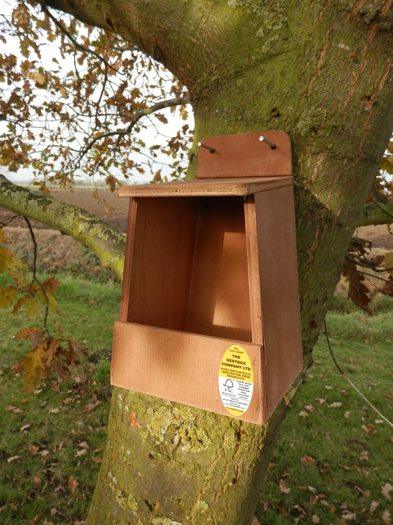 Nesting box for robin