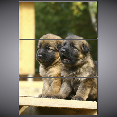 Cute German Shepherd Puppies Canvas-Medium Framed Wall Art Mural - Cool Tees and Things