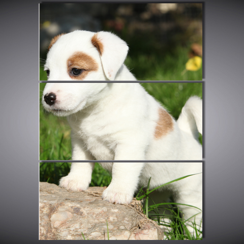 Cute Jack Russell Puppy Large Framed Canvas-Large-Framed-Cool Tees & Things