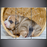 Pit Bull in a Basket-Medium-Not Framed-Cool Tees & Things