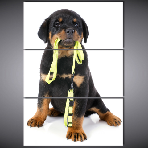 Rottweiler and Leash-Medium-Not Framed-Black/Brown/Yellow-Cool Tees & Things
