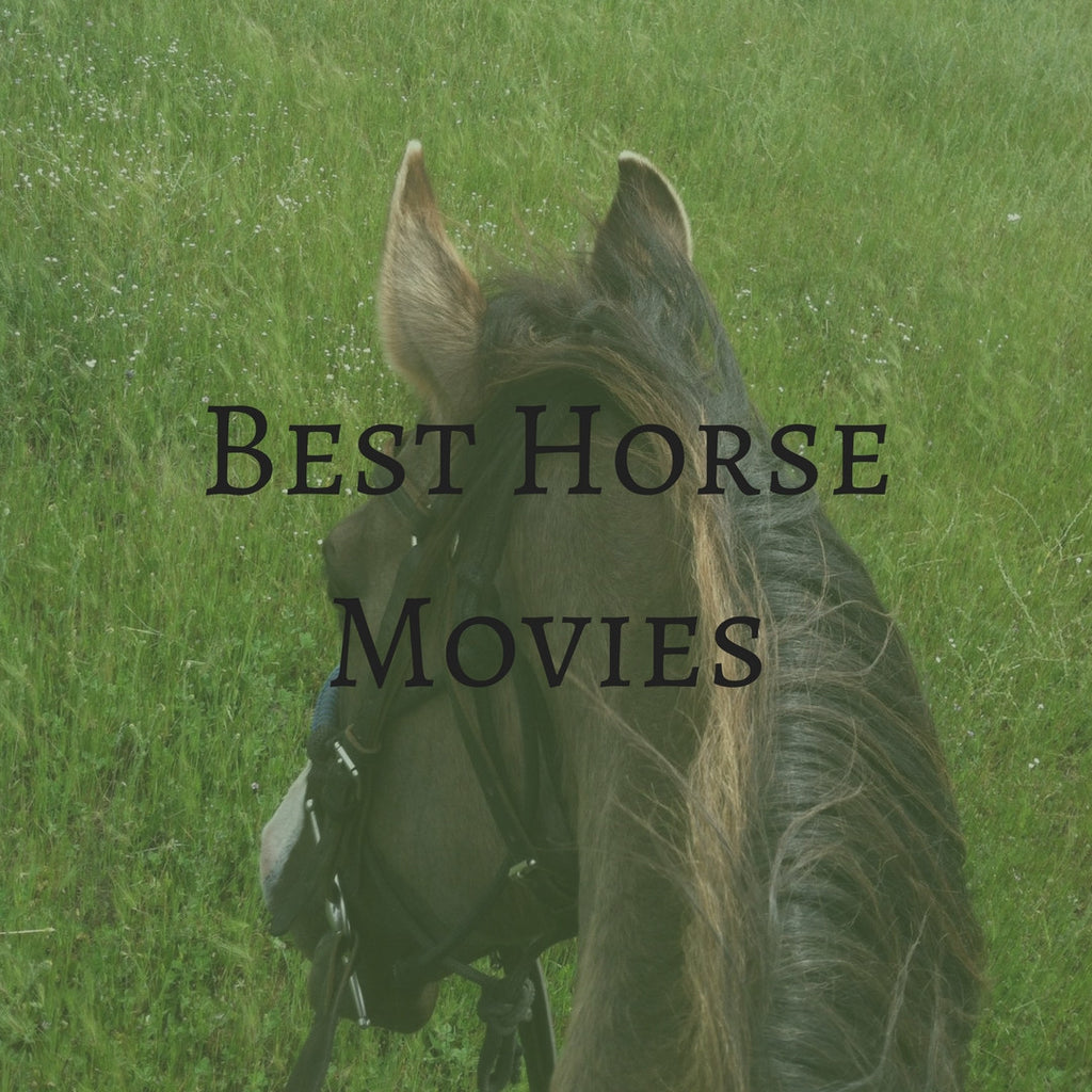 My Favorite Horse Movies