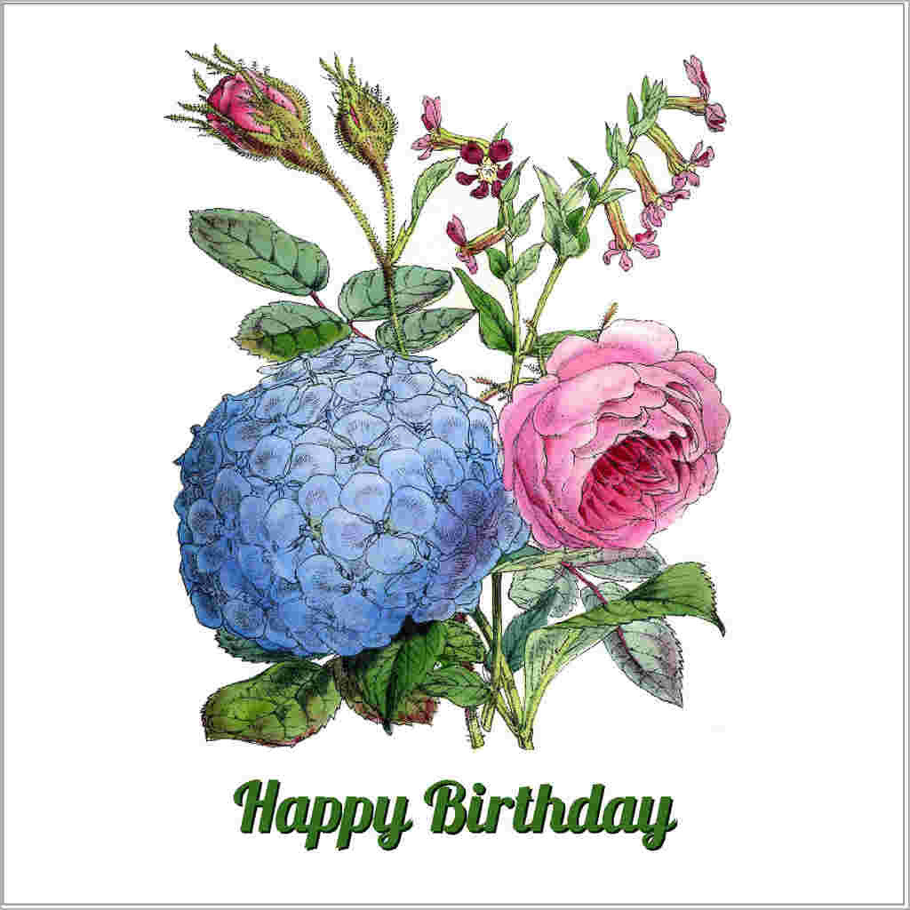 Birthday greeting card with vintage hydrangea and rose illustration