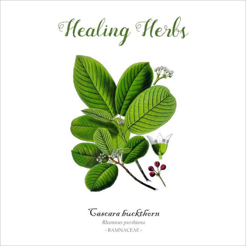 Outlander-inspired Healing Herbs Greeting Card - cascara buckthorn