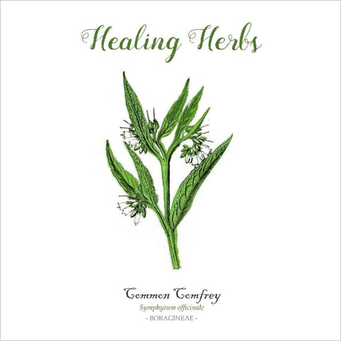 Outlander-inspired Healing Herbs Greeting Card - common comfrey