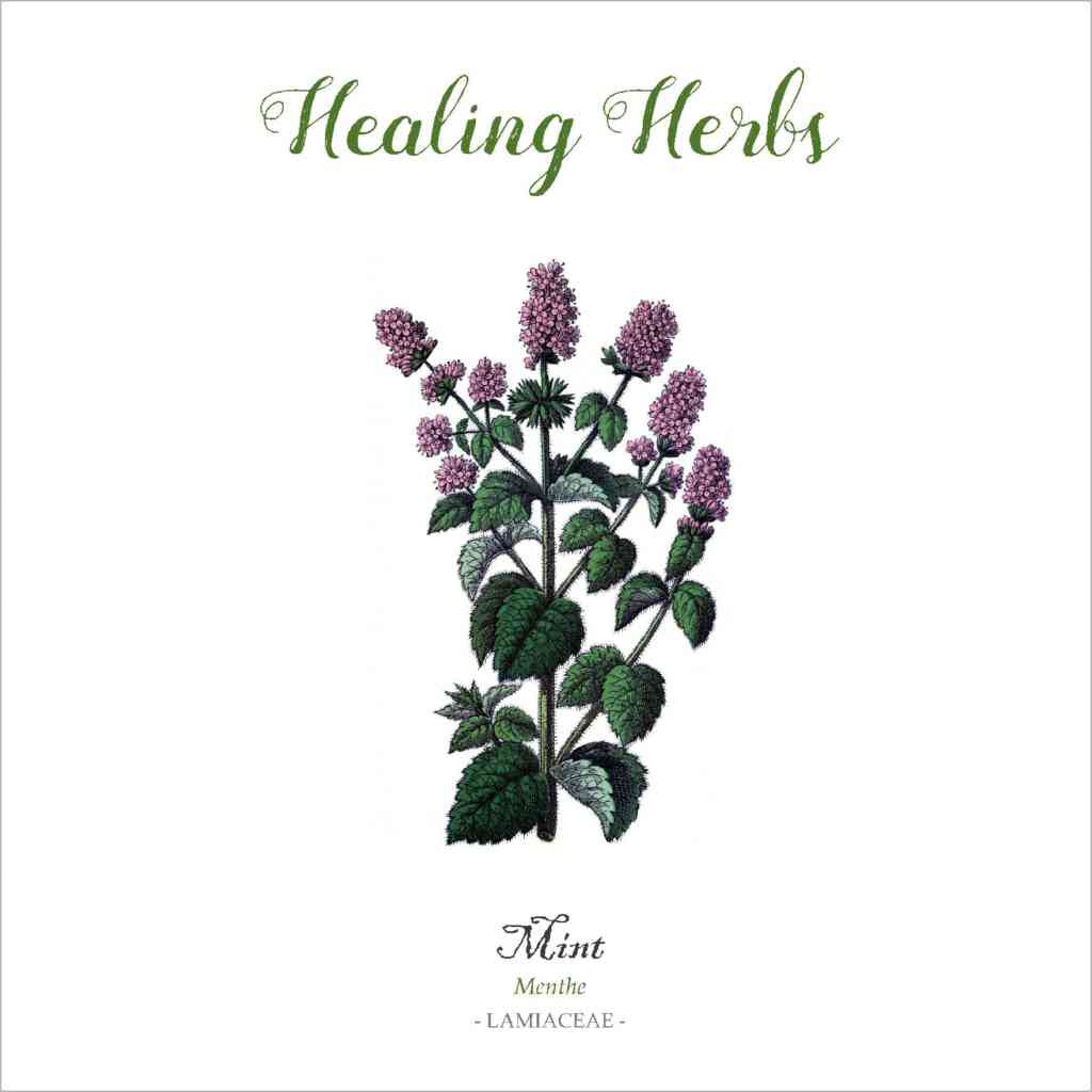 Outlander-inspired Healing Herbs Greeting Card - mint
