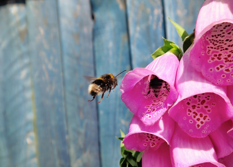 Dos and Don'ts for Creating Your Bee-Friendly Garden