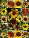 The Dirty Gardener Sunflower Seed Mix