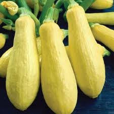 Prolific Straightneck Summer Squash Seed 1# From The Dirty Gardener
