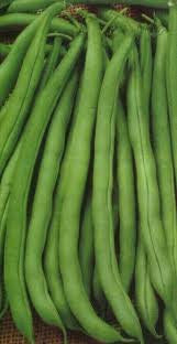 Bush Beans-tenderette Stringless Heirloom 5# Full Pound From the Dirty Gardener