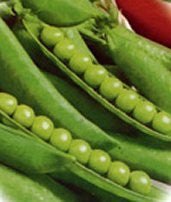 Early Alaska Pea Seed 1 Bulk Pound From The Dirty Gardener