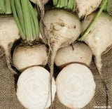 "Beet Seed ""White Albino"" 1# Bulk From The Dirty Gardener"