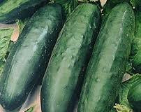 The Dirty Gardener Marketmore Cucumbers, 1 Pound