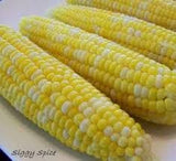 Peaches & Cream Bicolor Corn #5 Lb Heirloom seed - The Dirty Gardener