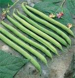 Bean Bush Provider 700 Seeds per Packet From The Dirty Gardener
