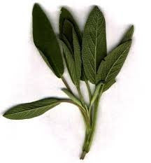 Broadleaf Sage Herb Seed 1# Pound From The Dirty Gardener