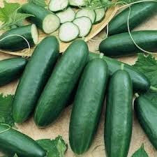 Garden Sweet Burpless Cucumber  From The Dirty Gardener