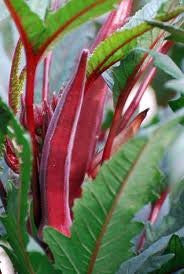 The Dirty Gardener Red Burgundy Okra Seeds