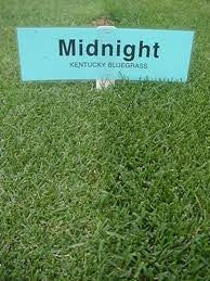 Midnight Kentucky Bluegrass Seed 50# From The Dirty Gardener