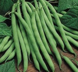 Blue Lake FM1K Pole Bean Seed - By The Pound from The Dirty Gardener