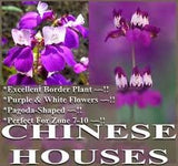 1/2 LB of Purple Chinese House Flower Seed - The Dirty Gardener