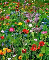 Low Growing Wildflower Seed Mixture- 1 Pound from The Dirty Gardener