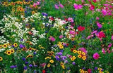 The Dirty Gardener Annual/Perennial Wildflower Seed Mix 2, 5 Pounds