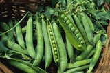 The Dirty Gardener Heirloom Green Arrow Peas