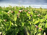 Awesome Cover Crop Seed Mix 10# From The Dirty Gardener