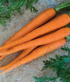 The Dirty Gardener Great Heirloom Imperator 58 Carrots