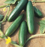 "Cucumber Seeds Heirloom ""Straight Eight"" 1lb. From The Dirty Gardener - The Dirty Gardener"
