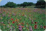 Texas/ Oklahoma Wildflower Seed Mix 1 Oz From The Dirty Gardener