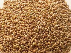 10# Pound of Alfalfa Seed From the Dirty Gardener - The Dirty Gardener