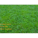 Ecology Lawn Seed- 20# Low Grow- No Mowing From The Dirty Gardener