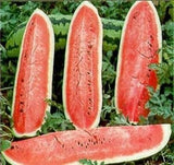 The Dirty Gardener Heirloom Jubilee Watermelons