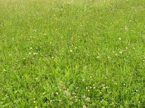 Green Roof Grass and Flower Mixture- Custom Mix for Rooftop Planting. 10# Bulk Pounds